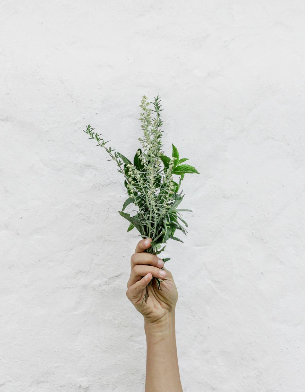 Hand holding plants on a white background